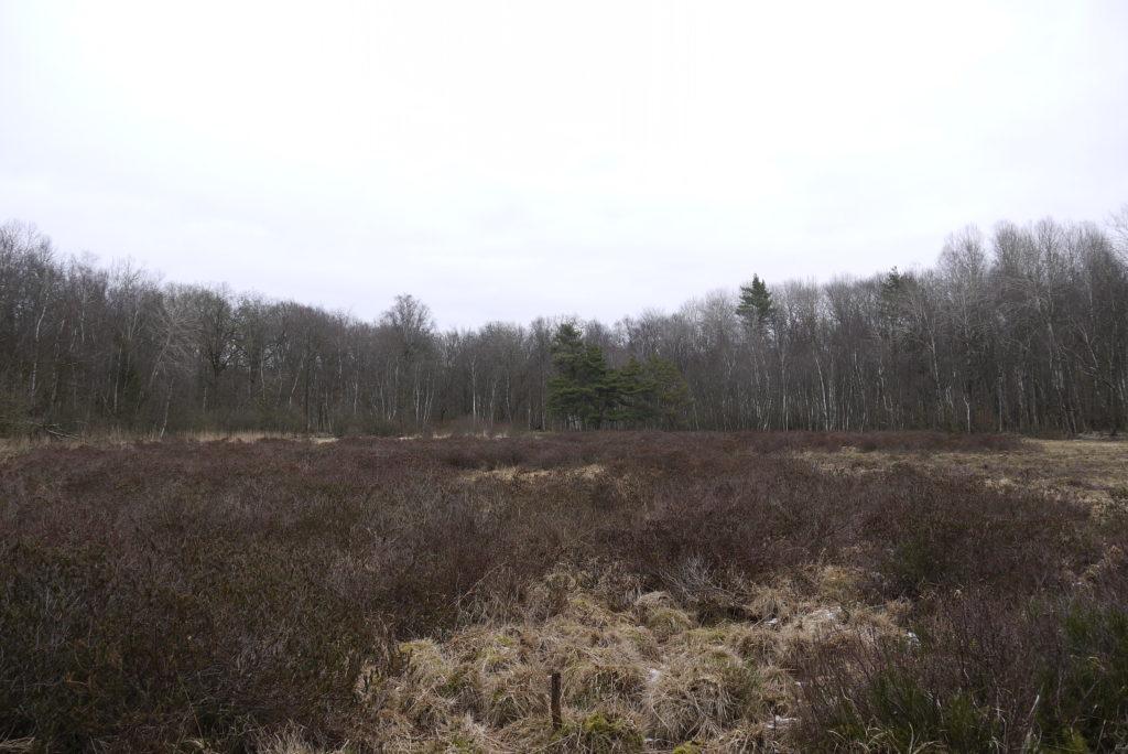 Teilintakte Hochmoorreste auf kleinem, künstlich vom Gehölzbewuchs freigehaltener Fläche,Torfstiche Stuer
