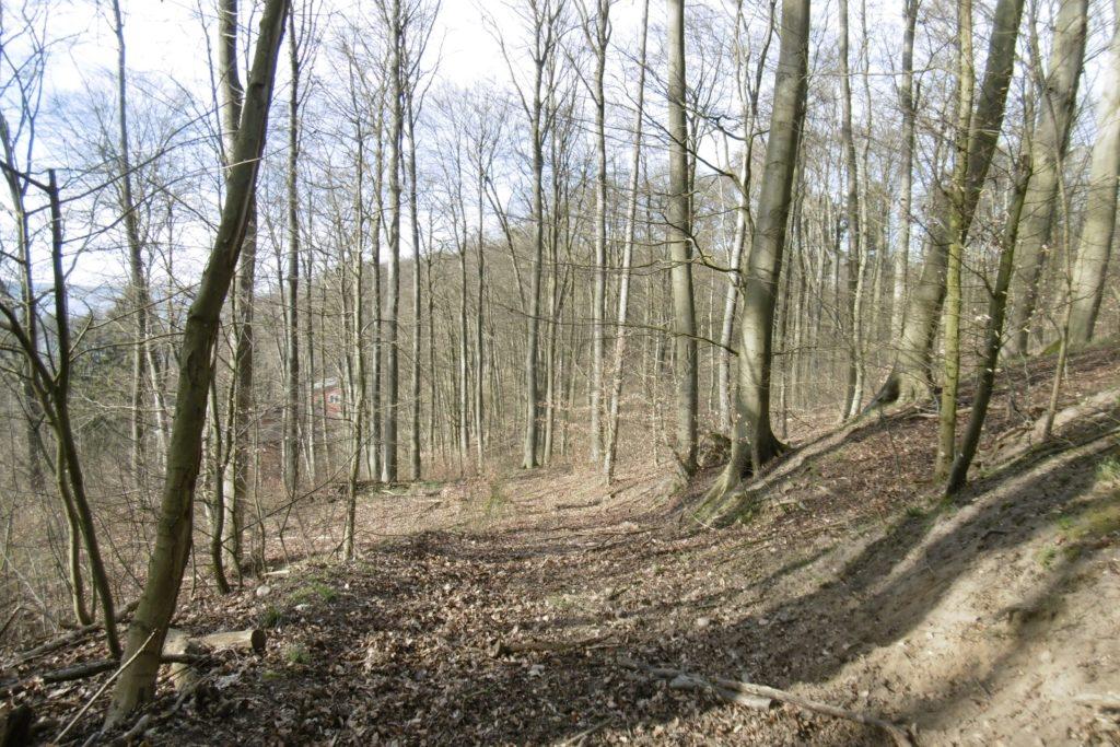 Bad Stuer,Waldwegrudimente,2020