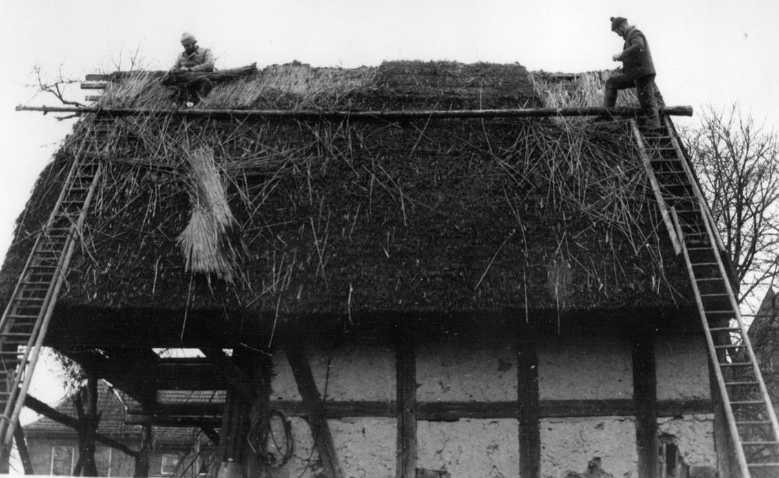 Abbau eines wenige Jahre alten Schilfdaches in Buchholz, 1982